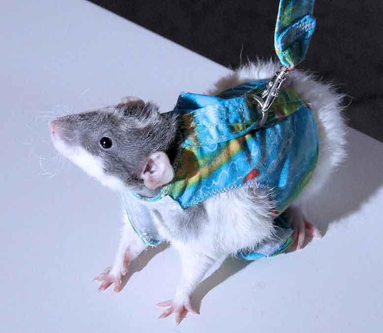 Выкройки одежды для крыс