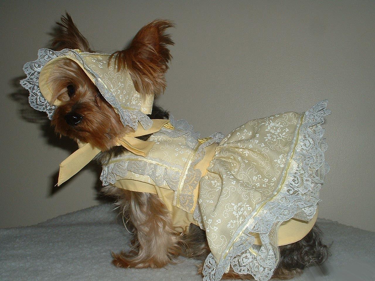 Белый свитер, ажурное платье для кота или собаки