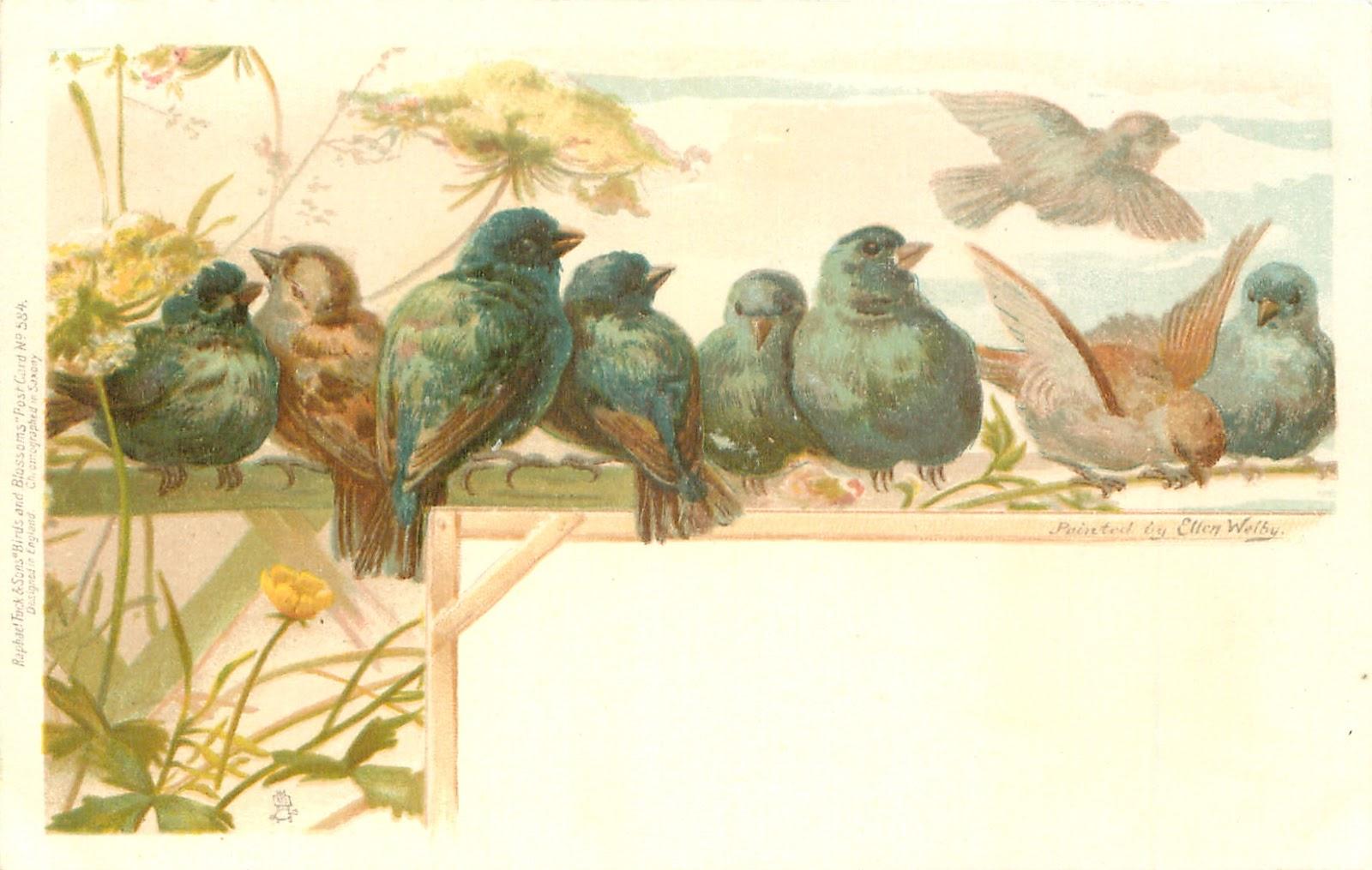 Красивые птицы, бабочки, насекомые в винтажных картинках