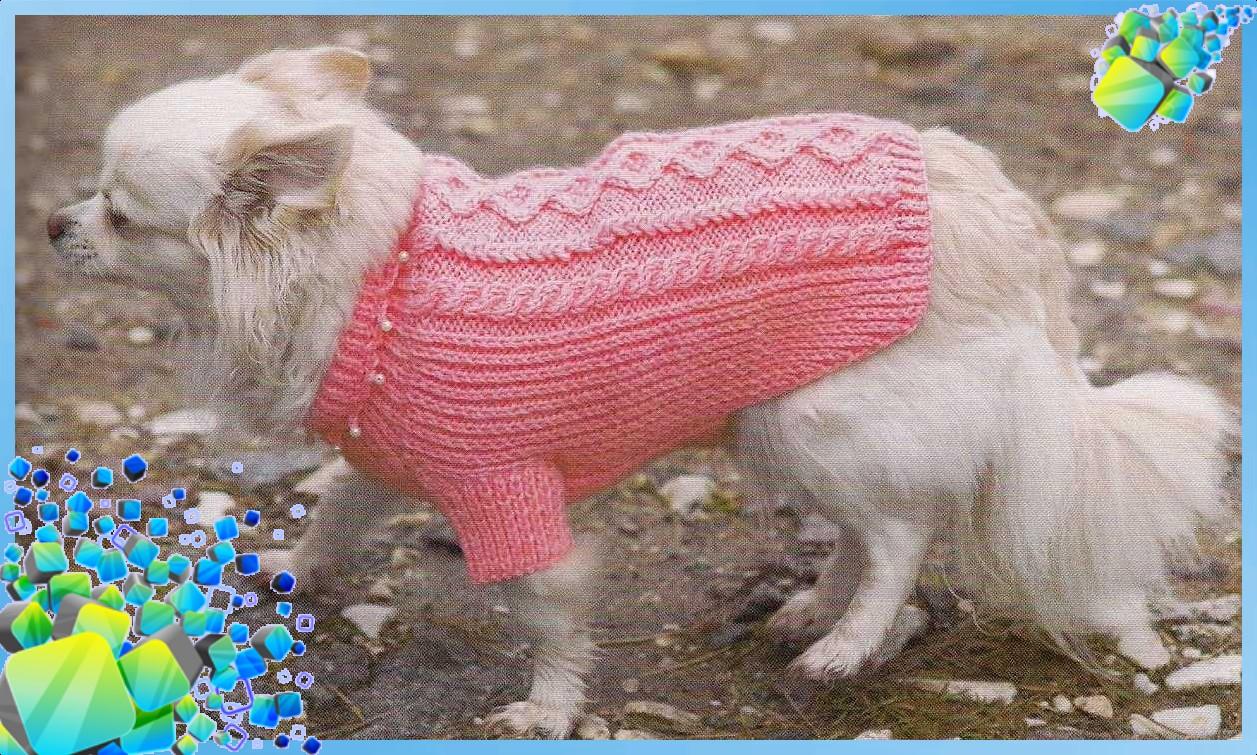 Вяжем свитер для собаки спицами