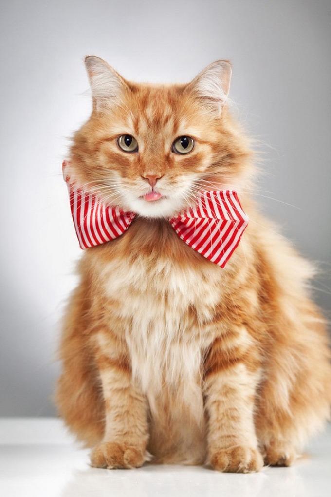 Как сделать кошке ошейник своими руками. Как сделать ошейник для кошек своими руками? Подробная инструкция