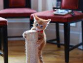 Котенок на когтеточке