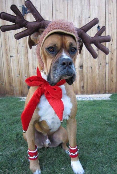 Собака в шапке с оленьими рогами