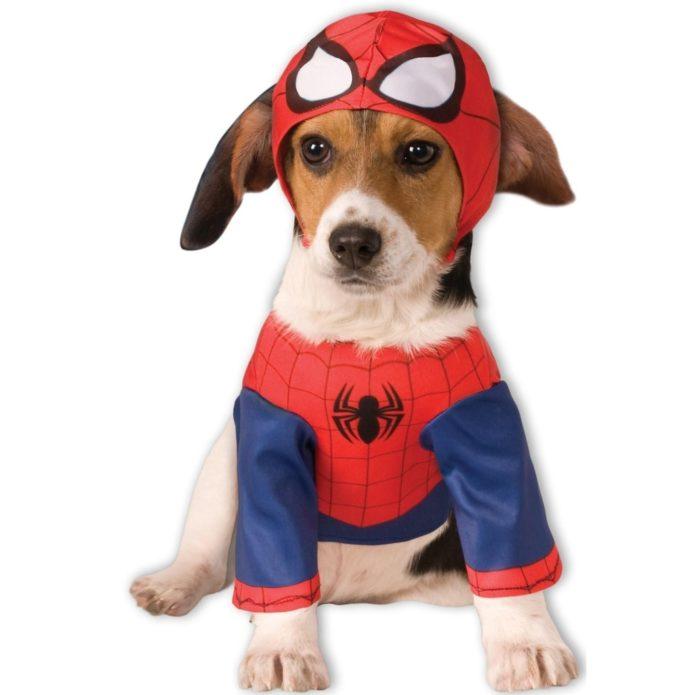 Собака в костюме человека-паука