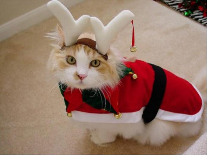 Кот в костюме оленя
