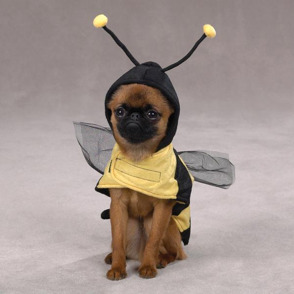 Собака в костюме пчелы