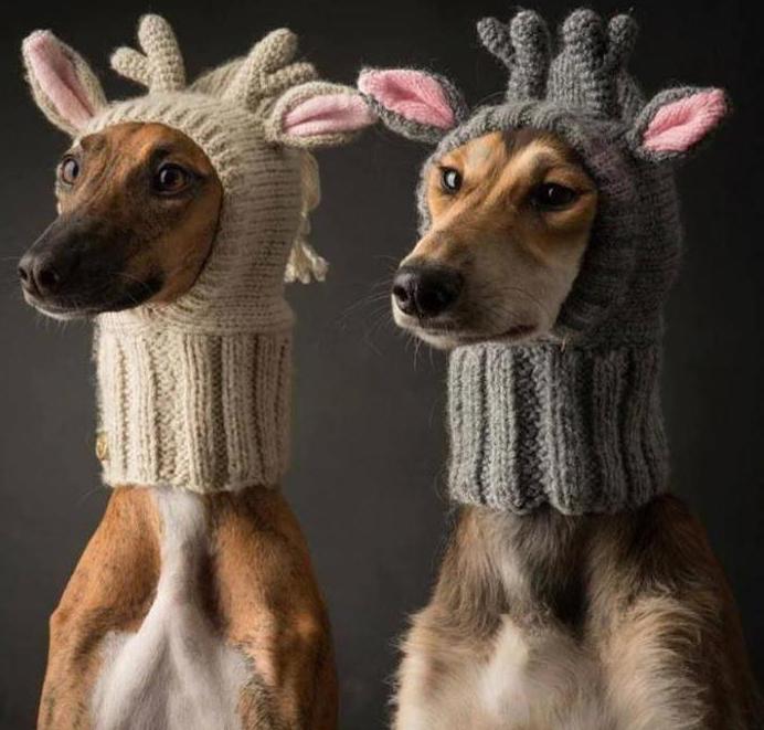 Новогодние шапки для собак