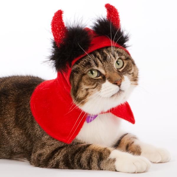 Кот в костюме чёртика