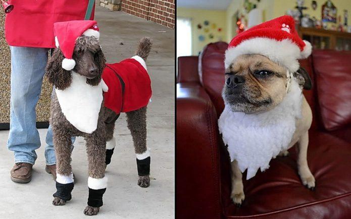 Собаки — Санта-клаусы