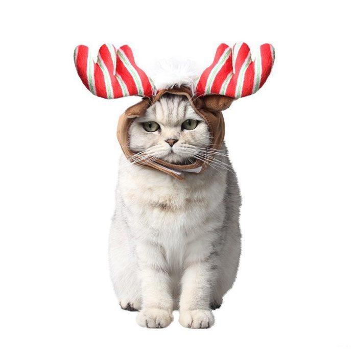 Кот в шапочке с оленьими рогами