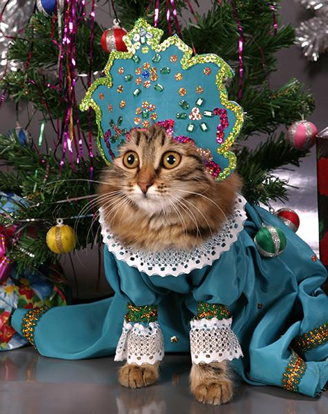Кошка-снегурочка