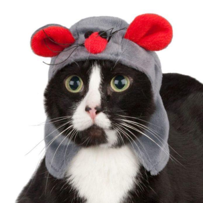 Кот в костюме мыши
