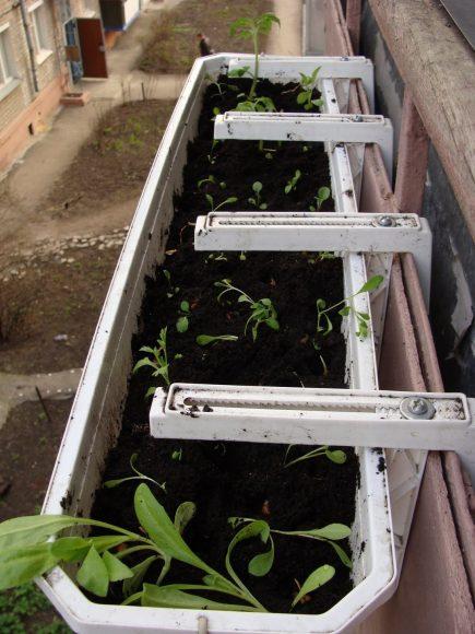 Навесной контейнер с рассадой