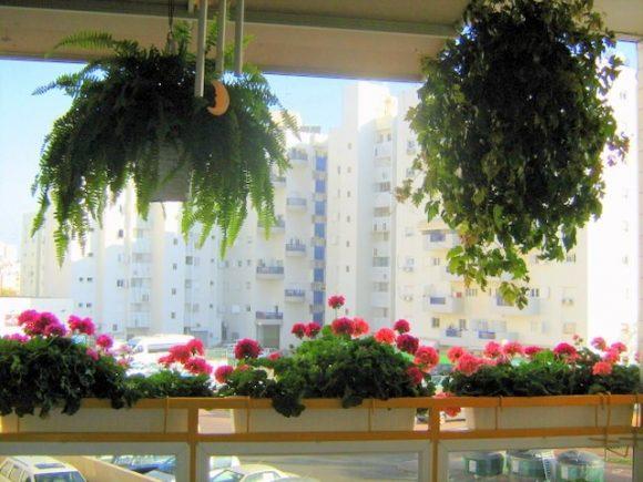 Красивые цветы на балконе