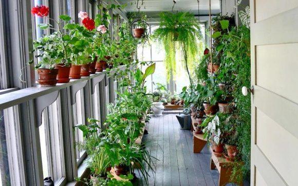 Большой застеклённый балкон с растениями