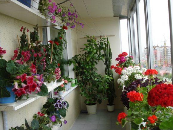 Цветущие растения на балконе