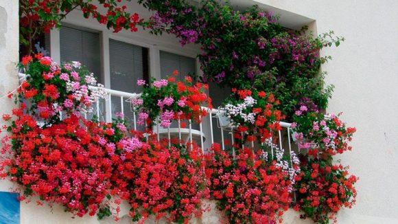 Балкон с обильно цветущими растениями