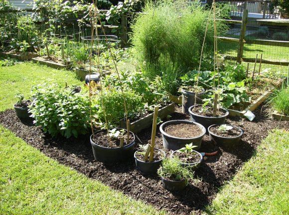 Грядки в тазах и растения