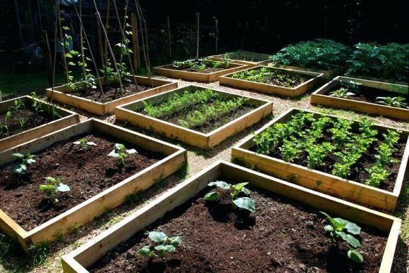 Выращивание растений в деревянных грядках