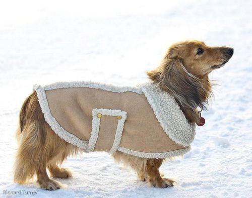Одежда для собаки из старой дубленки