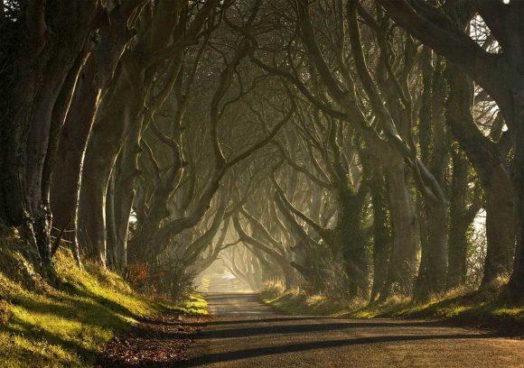 Тёмная аллея в Ирландии