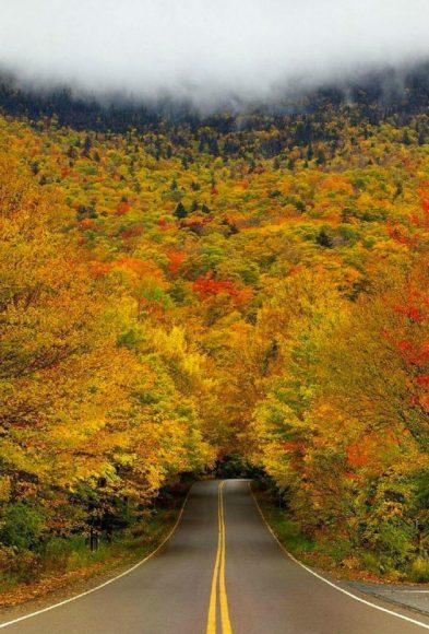 Туннель осенних деревьев в США