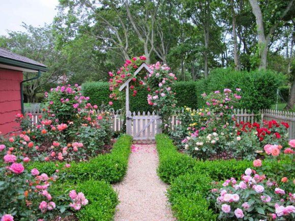 Вариант оформления розами небольшого дачного участка