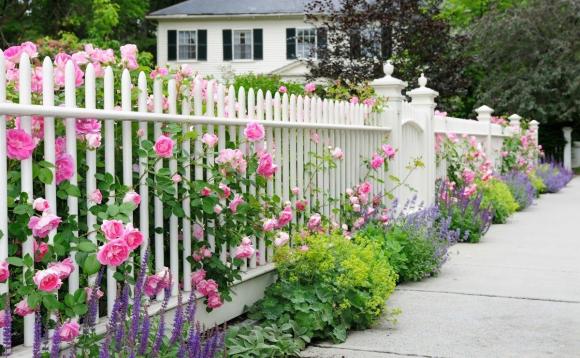 Оформление розами белого забора