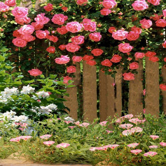 Живая изгородь из розовых кустов