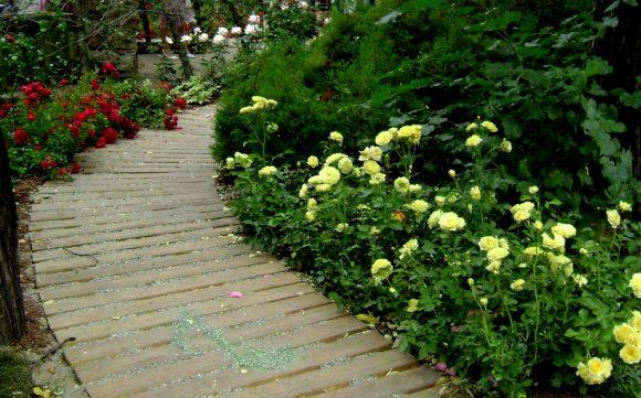 Оформление розами садовой дорожки