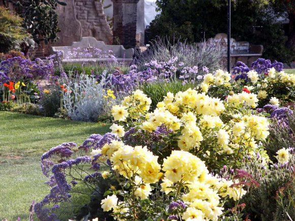 Оформление садовой дорожки розами и лавандой
