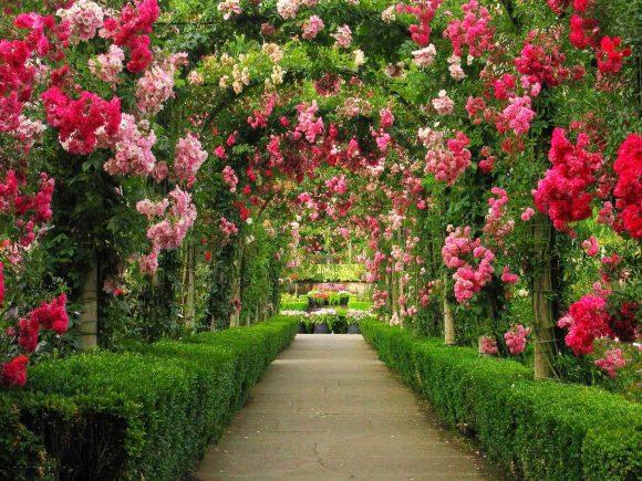 Эффектная цветочная арка над садовой дорожкой