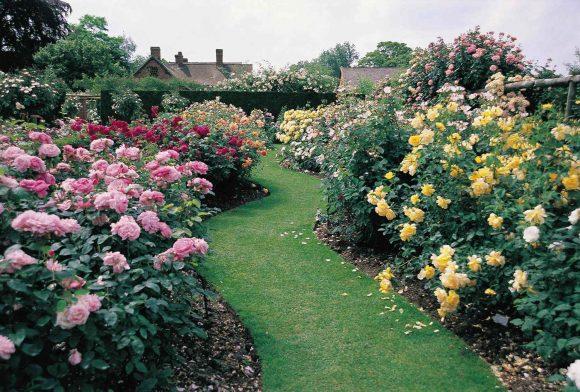 Оформление розовыми кустами садовой дорожки