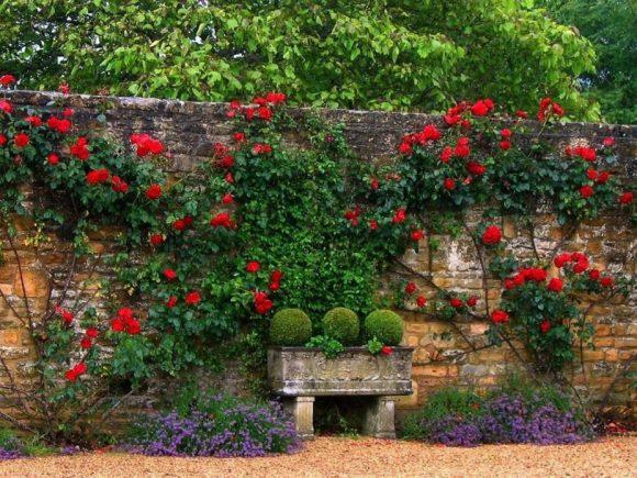 Эффектное озеленение высокого забора в саду
