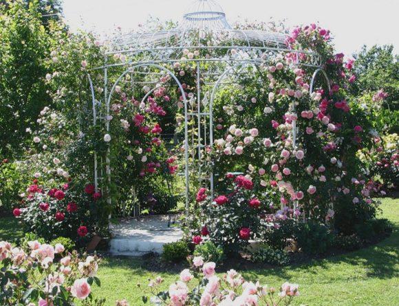 Металлическая беседка с вьющимися розами