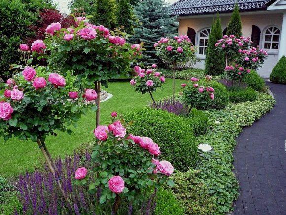 Оформление сада штамбовыми розами