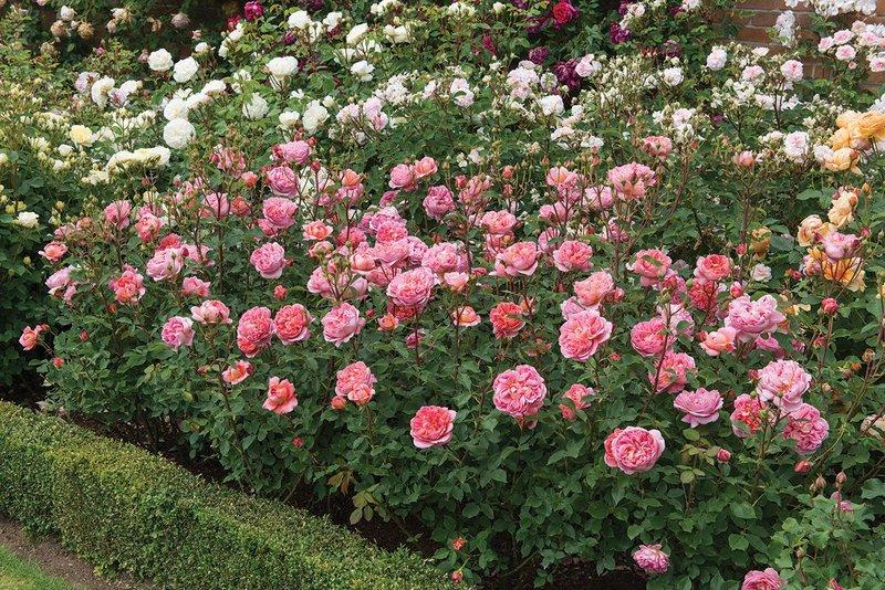 «Как хороши, как свежи были розы»: идеи ландшафтного дизайна