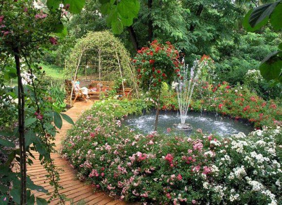 Разноцветные розы вокруг фонтана на садовом участке