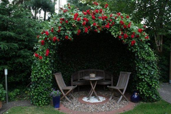 Пергола, оформленная плетистыми розами