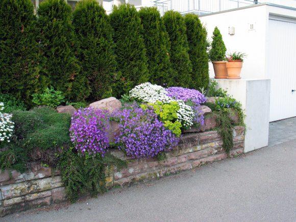 Живая изгородь с цветами вокруг дачного участка