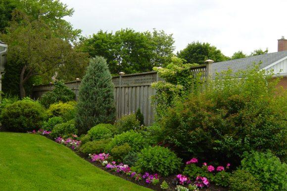 Вариант оформления живой изгороди однолетними цветами