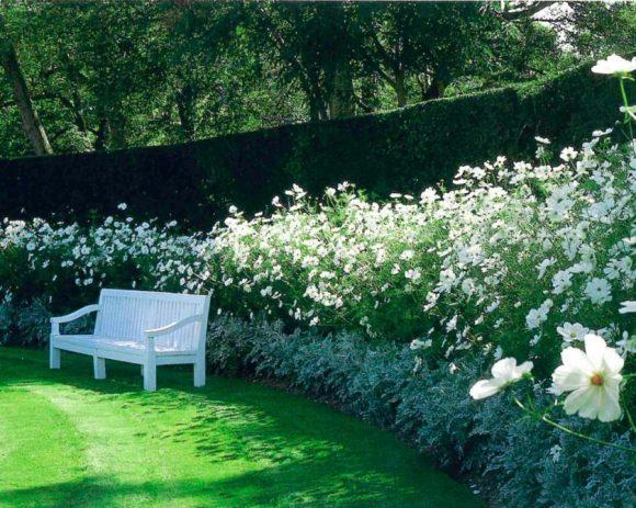 Садовая скамейка в тени цветущей изгороди