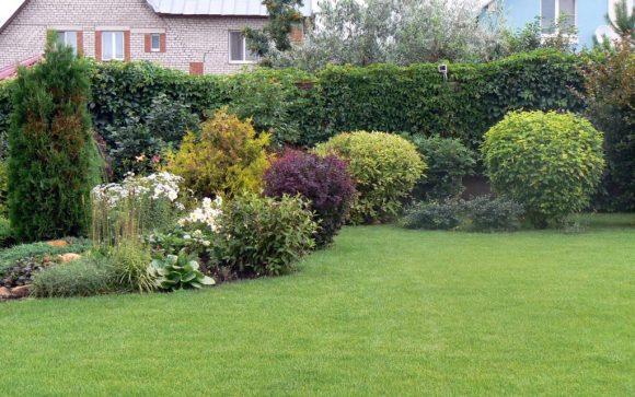 Живая изгородь с декоративным кустарником и плющом