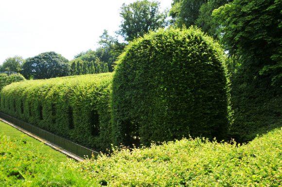 Живая изгородь в форме тоннеля