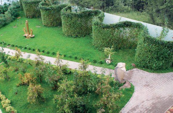 Необычная живая изгородь на даче