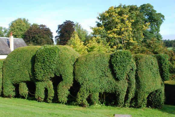 Эффектная живая изгородь в форме стада слонов