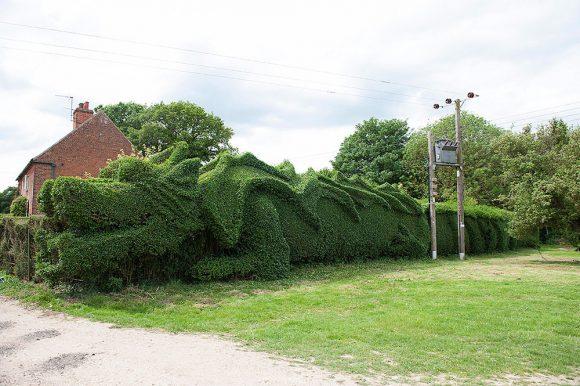 Изгородь-дракон на садовом участке