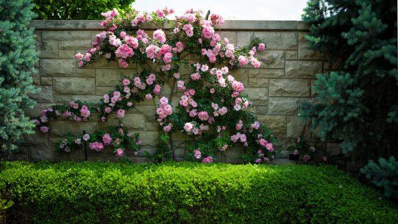 Живая изгородь из кустов, деревьев и роз