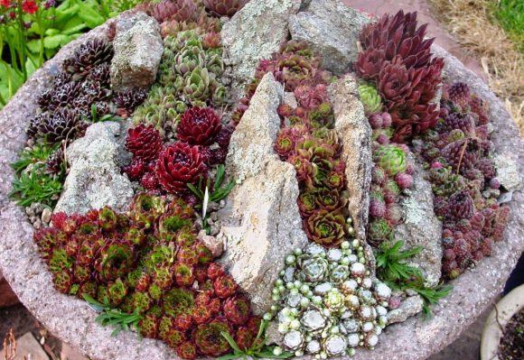 Маленький альпинарий, декорированный каменной розой