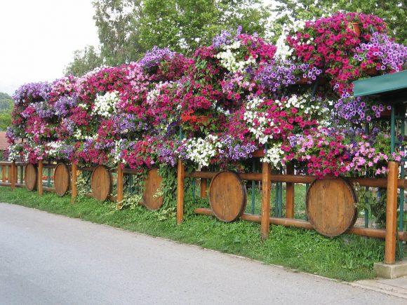 Цветочные композиции на дачном заборе